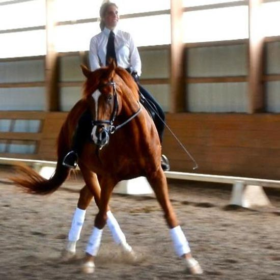 french-classical-dressage-training-clinician-trainer-lessons-clinics-maria-katsamanis4.jpg